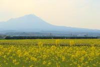 瑞風、春の風景 - かにさんの横歩き散歩日記