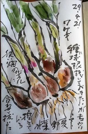 ワケギ - 絵手紙の小窓