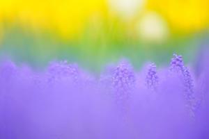 春の三色 - 夢見が丘