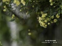 """幼い頃の幸せな時間 - ATELIER 302 """" 時の色 """""""