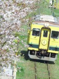 桜花につつまれて・・・いすみ鉄道 - aya's photo