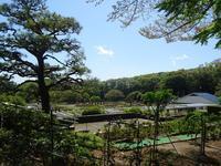 川崎市生田緑地ばら苑・春の一般公開日が決まりました。 - 元木はるみのバラとハーブのある暮らし・Salon de Roses