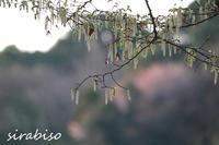 森の花飾り - 小さな森の写真館 (a small forest story)