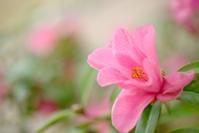 花だより4月 - kenihの部屋 (流浪する魂)
