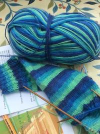 春の編み物  靴下を編む - イギリス ウェールズの自然なくらし