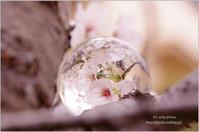 '17 桜*Ⅴ -crystal ball- - It's only photo