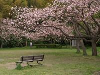 鎌倉山 2017/04/23 - 鵠沼通信