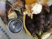 筍 サラ玉 蕗などでお昼ご飯 - 島暮らしのケセラセラ