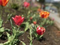 いろんな花☆はじまりの春 - よく飲むオバチャン☆本日のメニュー