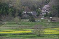 明日香 菜の花 - ぶらり記録(写真) 奈良・大阪・・・