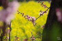 明日香 あなたに夢中 - ぶらり記録(写真) 奈良・大阪・・・