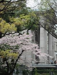 桜を求めて、中之島から天満橋へ。 - a&kashの時間。