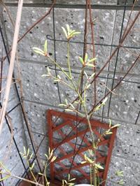 鴫立沢に学ぶ - チープガーデンの花々
