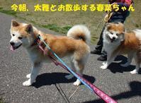 もうお留守番も大丈夫かな~^^ - もももの部屋(家族を待っている保護犬たちと我家の愛犬のブログです)