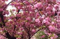 注)本日の営業時間は、11:30~15:00です。春の具沢山味噌汁とすり流し味噌汁をご用意してお待ちしております♪ - miso汁香房(ロジの木)