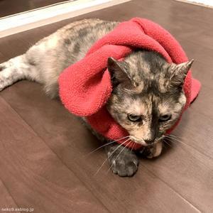 春の宵猫 2017 - 賃貸ネコ暮らし 賃貸住宅でネコを室内飼いする工夫