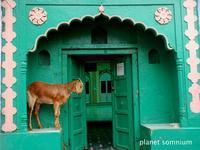 旅フォト:インド・アーグラー2(ウッタル・プラデーシュ州) - 映画を旅のいいわけに。