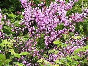 今朝の庭から 4/23 - mr&mrs kajiの小さなバラの庭