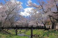 忍野八海~新名庄川 - favorite  photo