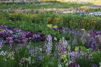 花の便りは横浜から〜里山編〜 part2 - CHIROのお庭しごと