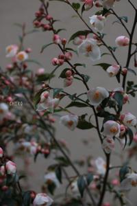 運命の再会 - CHIROのお庭しごと