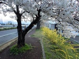 春まだ浅い山間部 - 四季折々に