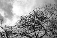 今年の桜総集編 - まちはBe  ~カメラ片手にまち歩き