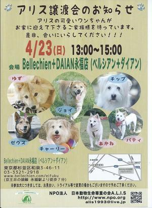たらちゃんのご紹介~明日の譲渡会、是非会いに来て下さいね(#^^#) - 子豚たちの反乱    ~保護犬達の幸せさがし~