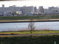 葛飾区小菅公園の春  1。 - 一場の写真 / 足立区リフォーム館・頑張る会社ブログ