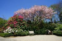 八重桜 - Around30 アクセラとGSX-S1000を買う