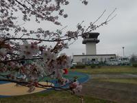 今年も調布飛行場でささやかにお花見です。 - のび丸亭の「奥様ごはんですよ」