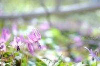 春が来た - Pastel color