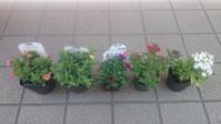 また花を買いました - 自分流 Happy Life