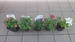 また花を買いました - 自分流Happy Life