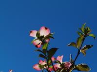 4.23 春の風物詩 続くなので - LGの散歩写真