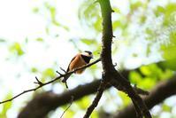 深谷市内の野鳥と花 - 何でも写真館