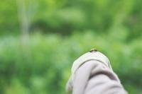 村上志緒先生のガーデンセミナー 参加募集中! - ミツバチと花とハチミツと。