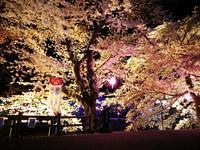 我が町の夜桜2 @福島県石川町 - 963-7837