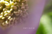 シラネアオイ*のころ - FUNKY'S BLUE SKY