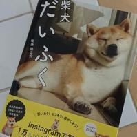 「柴犬だいふく」 - わたしの写真箱 ..:*:・'°☆