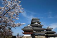 信濃路の桜 007 - 感動模写Ⅱ