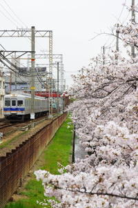 関西私鉄と桜巡り② - 鉄男の部屋
