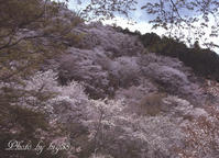 吉野山 - 癒しの空間