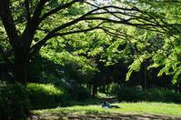 都立赤塚公園  新緑求めて - 東京雑派  TOKYO ZAPPA