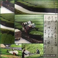 茶摘み風景 - 花伝からのメッセージ           http://www.kaden-symphony.com