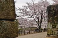 姫路城のお堀をぐるっと桜巡り(6)第3コーナーそしてゴール - たんぶーらんの戯言