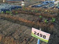 (4月22日) 野菜苗追加植え、水やり - 私の人生、私のライフ