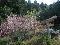 京都のお花見散歩(完) ~大原~ (撮影:4月16日) - ご無沙汰写真館