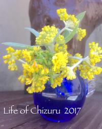 花壇に生えてた雑草を、お気に入りの花瓶に💠 - Life of Chizuru  … ナチュラルにうつくしく、そして笑顔と掃除