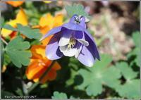 今咲いている花 - 野鳥の素顔 <野鳥と・・・他、日々の出来事>